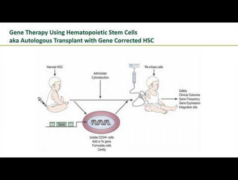 Stem Cell and Gene Therapy | Immune Deficiency Foundation